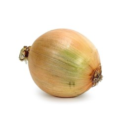 Yellow onion ORGANIC