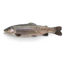 Rainbow trout approx.350 g