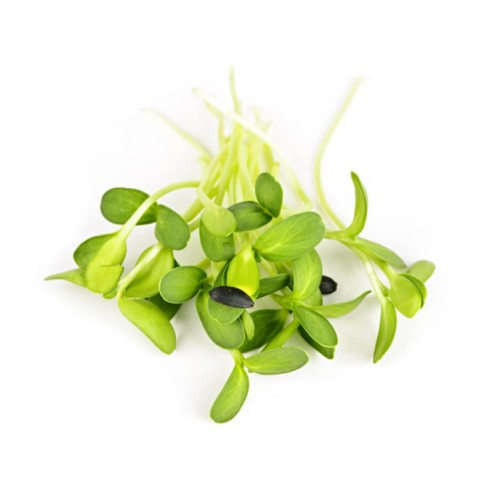 Sunflower Microgreens CZ